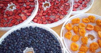 Kevin Angileri Dehydrate fruits