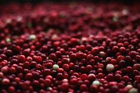 Kevin Angileri Cranberries- The Superfood to Stave Off Bladder Infections